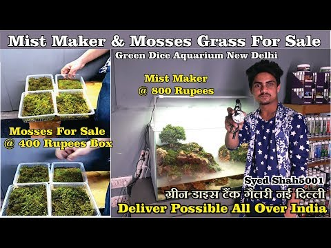 Moss for Aquarium @400 in the green dice aquascape Dehli | mist maker for Aquarium