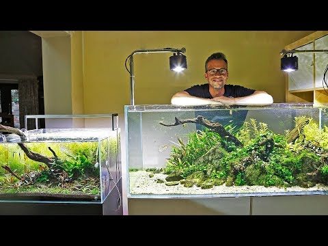 My Aquascape Gallery – EXCITING NEWS!!