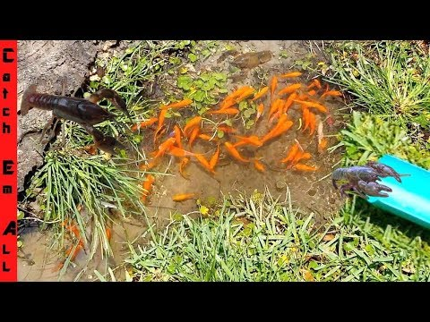 SHALLOW WATER FISH + CRAWFISH HARVEST with Googan Squad Jon B. vs Pond Squad