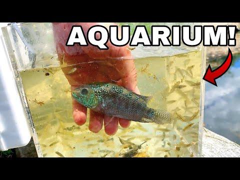 GLASS CUBE AQUARIUM WITH LIVE MICRO FISH! *DIY*