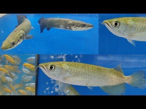 Naaz Aquarium Fish Shop at Kurla Fish Market