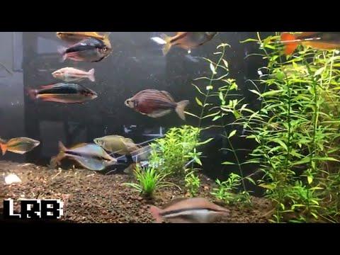 Saturday Friday Night Live Q&A Freshwater Aquarium Keeping Fish Shrimp and Plants