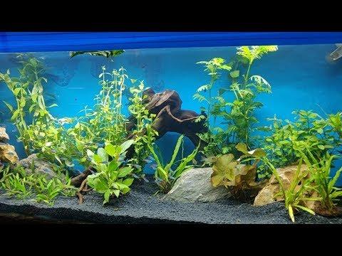 Aquarium Plants at Pyramid Aquarium Fish Shop
