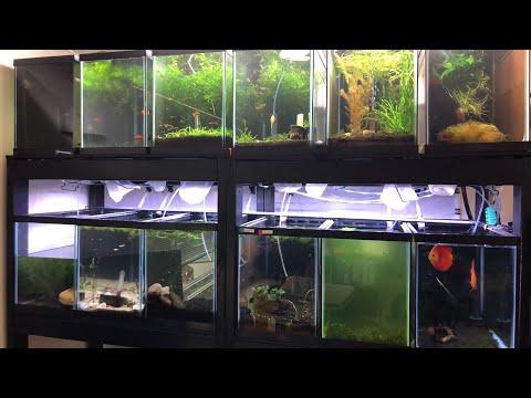 How to Make Super Strong Aquarium Fish Stands!