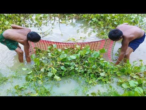 Traditional Cast Net Fishing In Village | Two Boy Catching Koi Fish in River By Use Village Net.