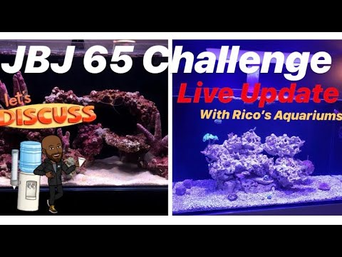 JBJ 65 Challenge Live Update – CJ & Ricos Aquariums