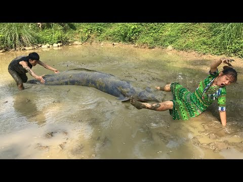 Catch Catfish By Hand At Mud Pond – Yummy Grilled Fish Delicious Eating – Survival skills