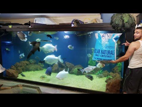 Salting your Freshwater Aquarium