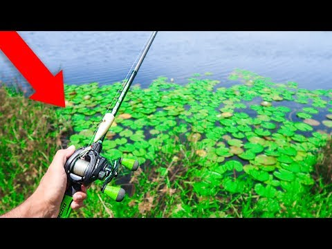 Fishing TOPWATER for BASS in PADS (Pond Fishing)