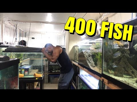 THIS YOUTUBER SPENT OVER $5,000 DOLLARS  ON AQUARIUMS AND FISH!
