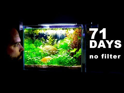 SUPER RELAXING 4 GALLON AQUARIUM…(How To Aquascape: No Filter No Ferts No co2 No Heater Fish Tank)