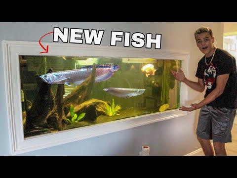 RARE AROWANA FISH for My AQUARIUM!!!