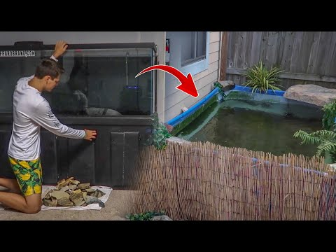Putting ALL My FISH into POOL POND!!!