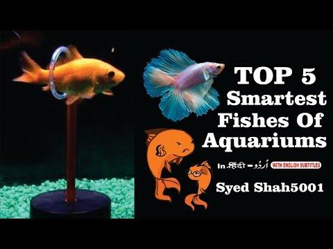 Top 5 Smartest Fish Fresh Water Aquarium Fish # TOP 5 BEST FISH PERSONALITIES