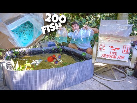 HUNDREDS Of COLORFUL Fish For My BREEDING POND!! *OSCARS Names REVEALED*