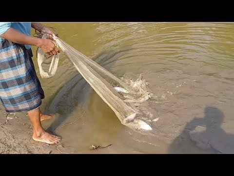 Catching lots of fish with cast Net | Net Fishing in village Pond
