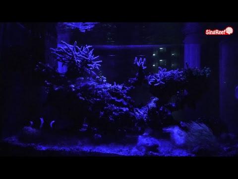 【LIVE CAMERA】Reef Aquarium Cam 水槽【アクアリウム】ライブカメラ