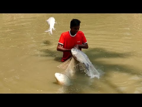 Fish Catching – Cast Net Fishing in Village Pond – Fish Trap