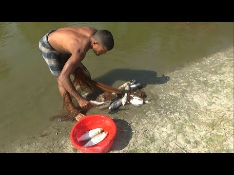 Catching Big Fish with net | Cast net fishing in the village pond