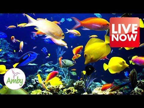 Relaxing Aquarium 24/7  🐟🐠 Relax Study Chill Sleep Meditation Music – Relaxing Screensaver
