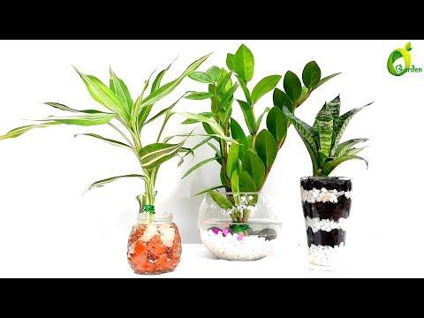 how to make indoor water garden/water garden//ORGANIC GARDEN