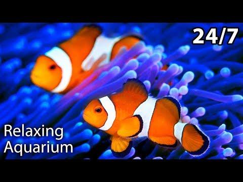 The Best Relaxing Aquarium 24/7 🐟🐠 Relaxing Sleep Music, Calm Music, Insomnia, Meditation, Study,