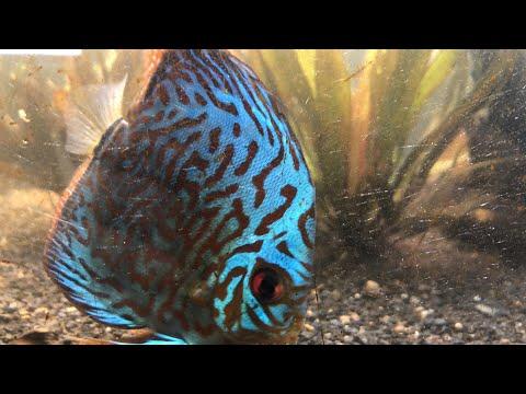 Friday Night Live Q&A Freshwater Aquarium Keeping Fish Shrimp and Plants