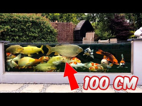 Garden Designs | Epic Backyard Koi Ponds with Glass