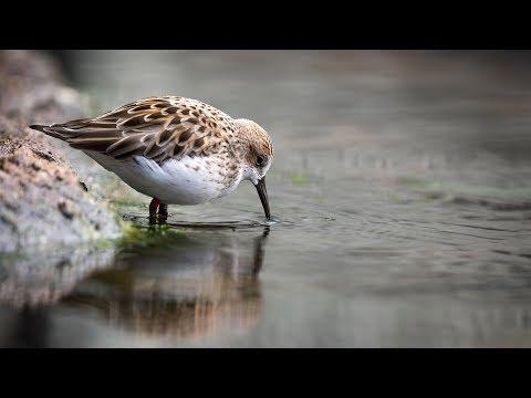 Live Aviary Cam – Monterey Bay Aquarium