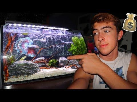 My NEW DREAM BETTA FISH TANK! (CRAZY)