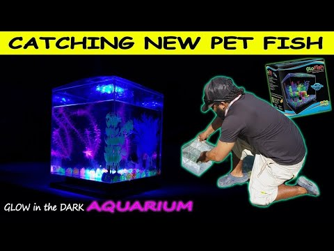 Catching Pet Fish for Glowing Aquarium