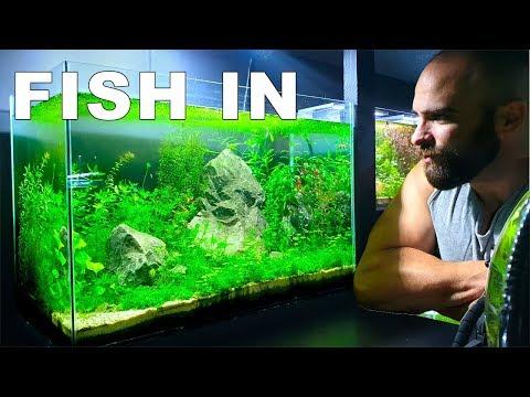 NEW FISH || HUGE NO FILTER AQUARIUM/AQUASCAPE LOW TECH (How To: No Filter No Ferts No co2 No Heater)