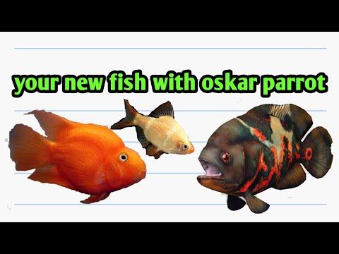 new aquarium fish