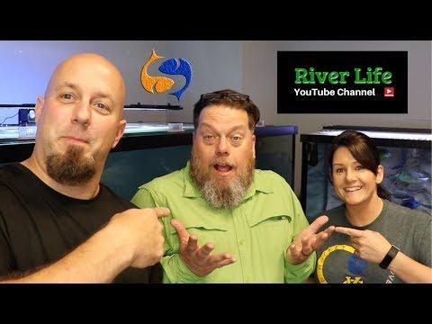 Let's Buy A BIG Aquarium!! Tank Talk Live With River Life!!