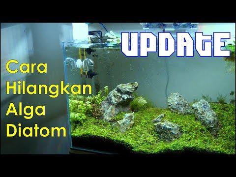 Update 60cm Aquascape Iwagumi – Sejauh mana perkembangannya?