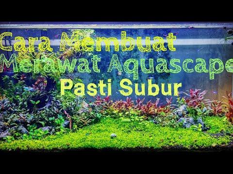 Perawatan aquascape dari awal setup Hingga Mature   Aquascape tips 3