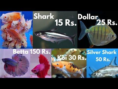 Fish Price of Pari Aquarium Fish Shop