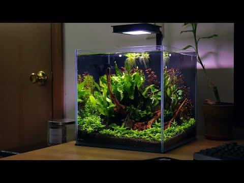 Non-co2 Nano Aquascape Week 3 Update