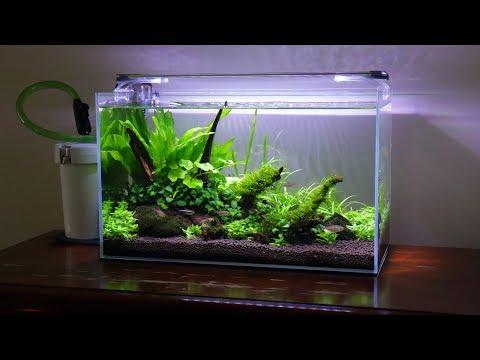 10 Gallon Non-Co2 Aquascape   10k Giveaway Announcement!