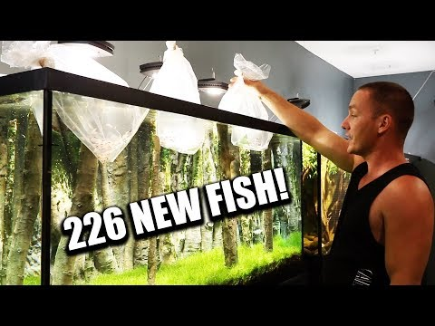 UNBOXING 226 AQUARIUM FISH!!
