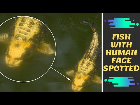 Fish with a HUMAN FACE is Spotted Swimming in a Pond