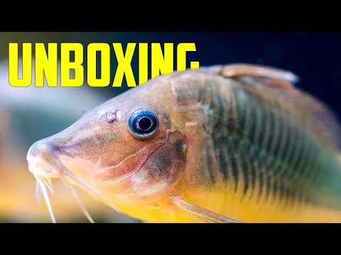 I HAVE to Take These New Fish Home [Unboxing]