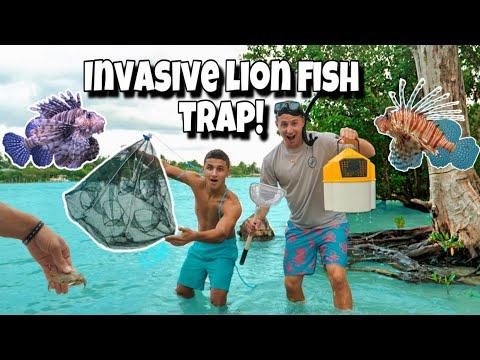 FISH TRAP Catches INVASIVE FISH For My AQUARIUM!!