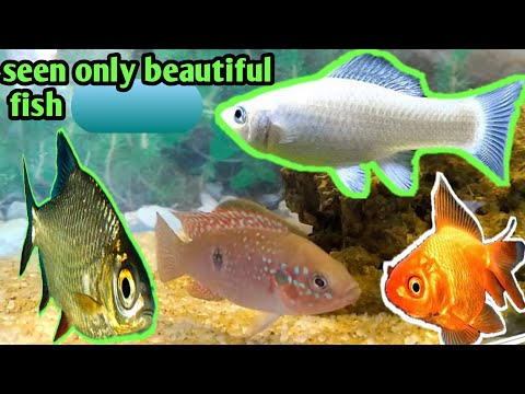 beautiful fish aquarium and fish baby