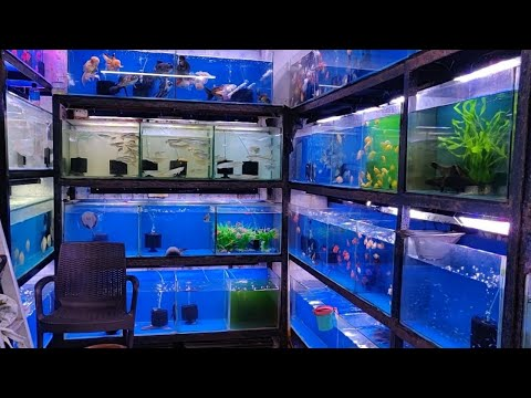 Aqua Planet Aquarium Fish Shop Kurla Fish Market