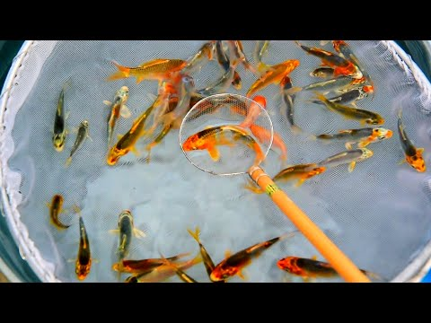 I STOCK MY POND WITH 2,000 FISH  | Fixing Pond roofing!