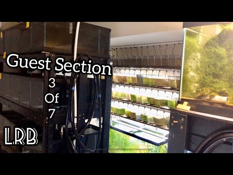 Aquarium Shrimp and Fish Room Tour! Section 3 of 7 the Guest