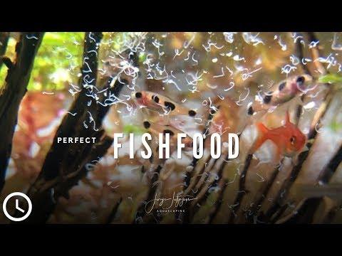BEST AQUARIUM FISH FOOD