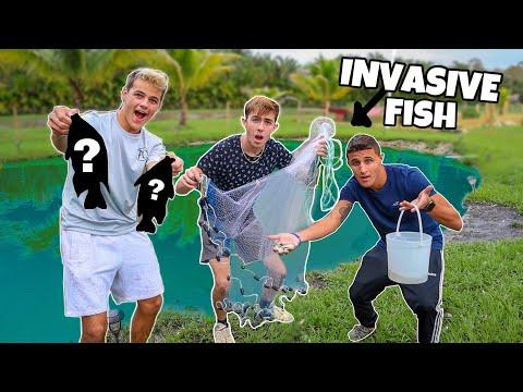 My BACKYARD POND is FULL of INVASIVE FISH!? *FEEDING*