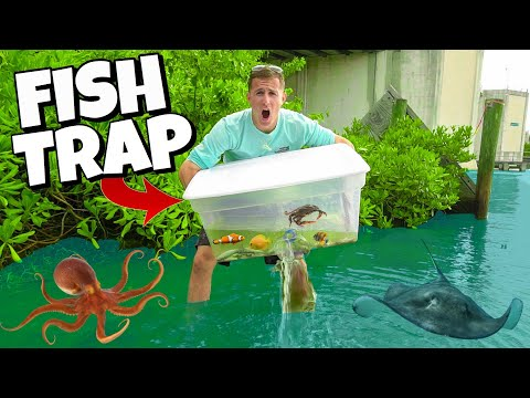 FISH TRAP CATCHES EXOTIC AQUARIUM FISH in HIDDEN MANGROVES!! (Find Your Own Bait Challenge)